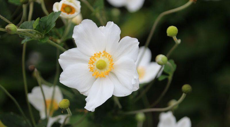 bloemenborder